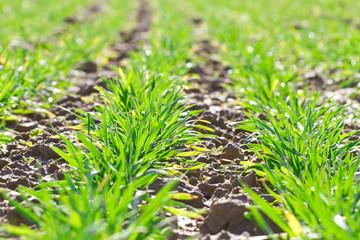Zartes Wachstum im Frühling