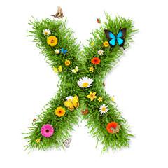"""Spring letter """"X"""""""