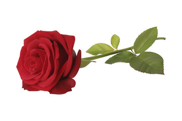 Realistic red vector rose