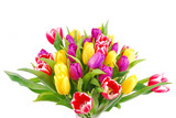 tulip bouquet isolated on white