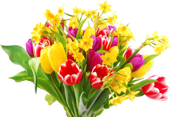tulip and daffodil bouquet isolated on white