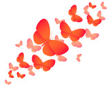 Orange colored butterflies on white - vector illustration
