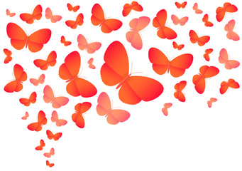 Colorful vector butterflies on white