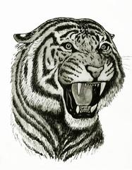 ritratto di tigre che ruggisce