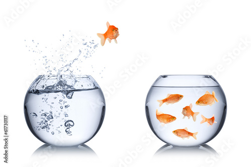 canvas print picture fish escape concept