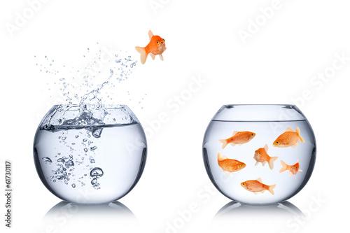 Fototapeta fish escape concept