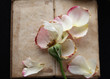 Vintage book with fallen rose petals