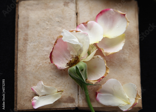 Vintage book with fallen rose petals