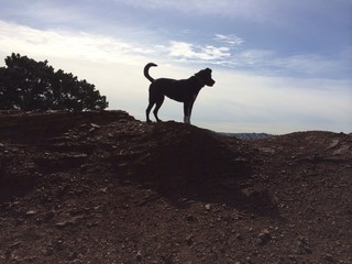 dog sillouette on a hill