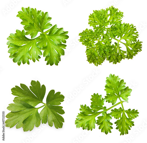 Parsley herb isolated on white background.