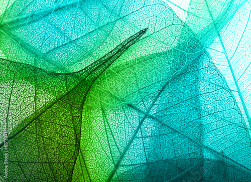 Spoed canvasdoek 2cm dik Textures Macro leaves background texture