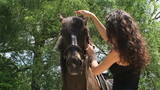 Young woman petting brown stallion