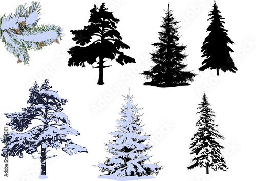 pines and firs in snow isolated on white