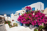Traditional greek house with a big bougainvillea flowers in Oia