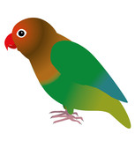 An illustration of a fisheri lovebird