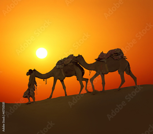 In de dag Kameel cameleerand camels - silhouette against sunset