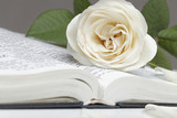 Bible and the rose