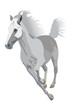 vector white horse