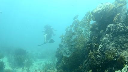 people diving
