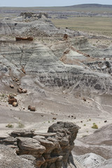 Petrified Forest of the Past