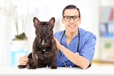 Young male veterinarian doctor posing with bulldog in his office