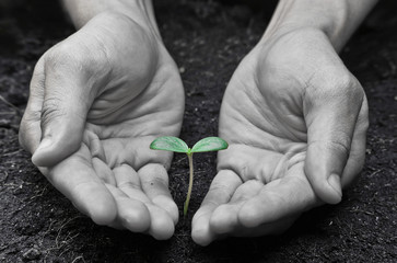 hands growing a young tree / heal the world