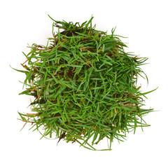 circle grass