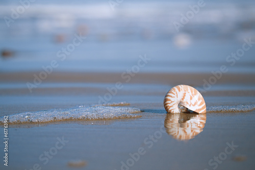 nautilus sea shell on Atlantic ocean Legzira beach, morocco