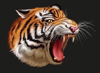 A head of a roaring tiger