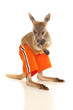 Kangaroo stand look in orange shorts