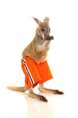 Kangaroo in orange shorts lick paws
