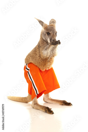 Papiers peints Kangaroo Kangaroo in orange shorts lick paws