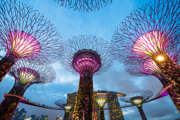 Big Trees, Singapour