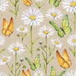 Chamomile flowers and butterflies illustration