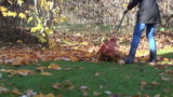gardener rake in pile dry leaves seasonal autumn garden work