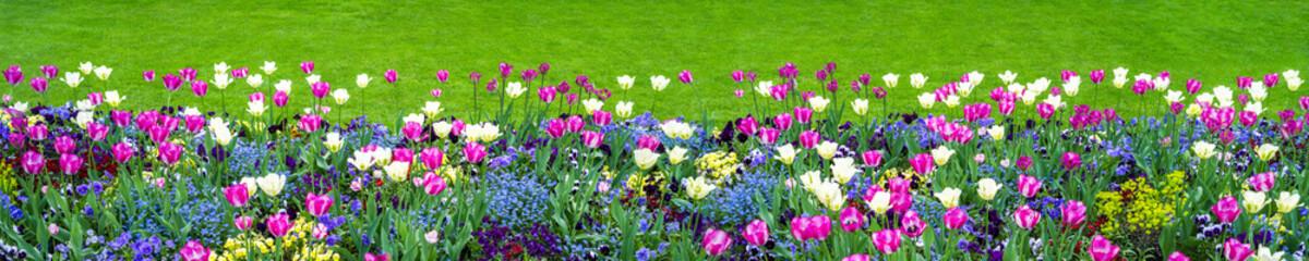 Blumenwiese als Hintergrund