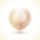 Heart Shaped Seashell, Isolated on White.