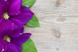 Purple Clematis on wooden background