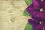 Purple Clematis with green leaves on wooden background