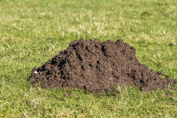 Close up of a mole hill