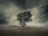 Foggy Lonely Tree