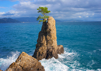 The tree on the rock near Portofino, Italy