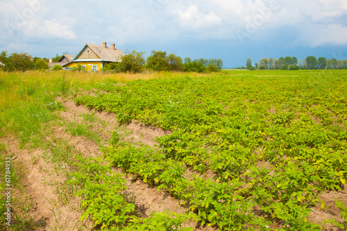 potato field and farmhouse. Village life.