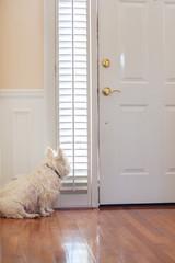 Pet dog waiting at the front door