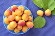 Apricots in a bowl, selective focus