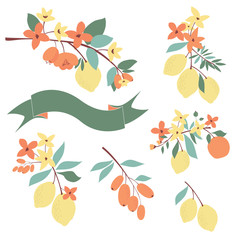 Floral and citrus graphic set