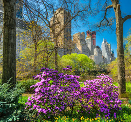 Central park, New York City. USA.