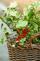 Christmas Holly in the basket on the market.
