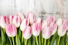 Belle tulipes roses et blanches sur fond de bois. L'espace de copie