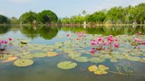 Ornamental pond in the park with lilies. Thailand, Sukhothai